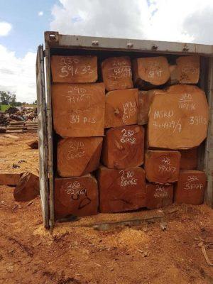 Thủ tục nhập khẩu gỗ Lim châu Phi
